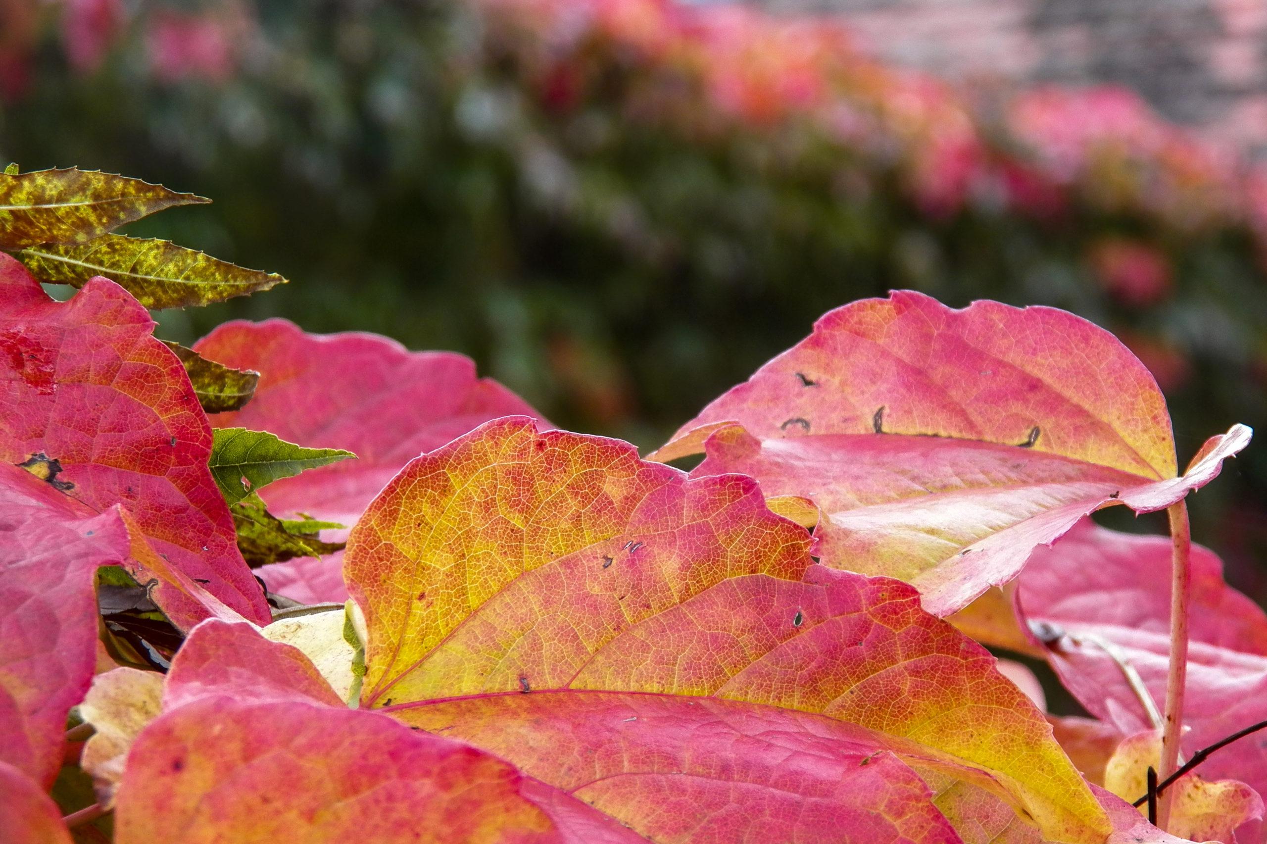 Na podzim.